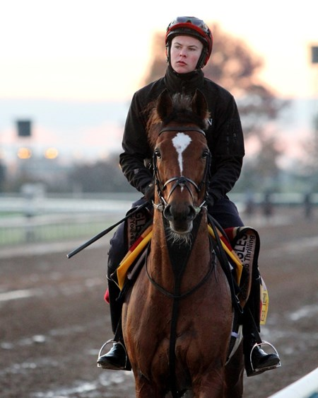 Gleneagles (Breeders' Cup Classic) with Joseph O'Brien on the track at Keeneland on October 29, 2015. Photo By: Chad B. Harmon