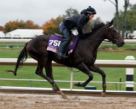 Right There (Breeders' Cup Juvenile Fillies) on the track at Keeneland on October 28, 2015. Photo By: Chad B. Harmon