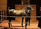 Fasig-Tipton October Yearling Sale Wrap