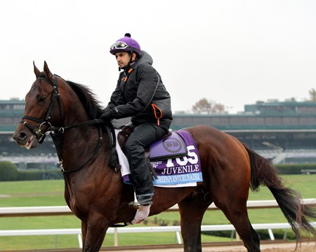 Greenpointcrusader (Breeders' Cup Juvenile) on the track at Keeneland on October 27, 2015. Photo By: Chad B. Harmon