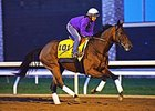 "Beholder checks out the track at Keeneland on Oct 22.<br><a target=""blank"" href=""http://photos.bloodhorse.com/BreedersCup/2015-Breeders-Cup/Works/i-8t5vzhG"">Order This Photo</a>"