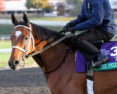 The Pizza Man (Breeders' Cup Turf) on the training track at Keeneland on October 29, 2015. Photo By: Chad B. Harmon