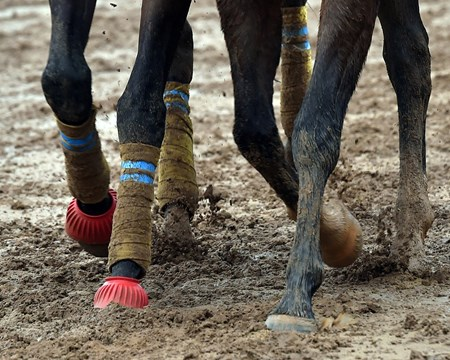 ( October 27, 2015) Muddy morning at Keeneland...