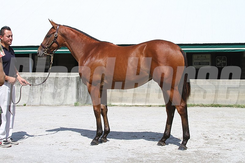 Beholder as a yearling