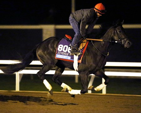 Conquest Daddyo - Morning Gallop - Keeneland Race Course - 102315