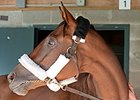 "Beholder<br><a target=""blank"" href=""http://photos.bloodhorse.com/BreedersCup/2015-Breeders-Cup/Works/i-FgHCtLK"">Order This Photo</a>"