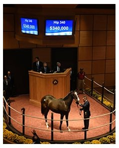 Hip 340 by Scat Daddy brought $340,000.