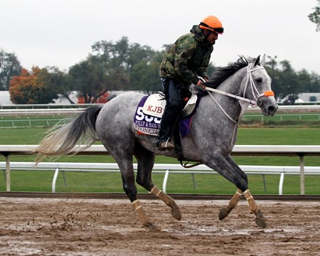 Stonetastic (Breeders' Cup Filly & Mare Sprint) on the track at Keeneland on October 27, 2015. Photo By: Chad B. Harmon