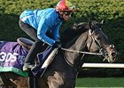 "Golden Horn<br><a target=""blank"" href=""http://photos.bloodhorse.com/BreedersCup/2015-Breeders-Cup/Works/i-mkzmDmh"">Order This Photo</a>"