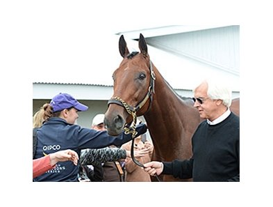 American Pharoah a day after winning the Breeders' Cup Classic.