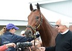 Baffert Marvels at 'Pharoah' After Classic