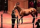 Fasig-Tipton Kentucky November Sale Wrap