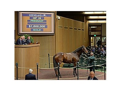 Hip 28, Colonial Flag was purchased by Reynolds Bell for $1.6 Million.