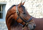 "American Pharoah<br><a target=""blank"" href=""http://photos.bloodhorse.com/Thoroughbred-Greats/American-Pharoah/i-nJxQ5F4"">Order This Photo</a>"
