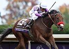 "Nyquist<br><a target=""blank"" href=""http://photos.bloodhorse.com/BreedersCup/2015-Breeders-Cup/Sentient-Jet-Breeders-Cup-Juve/i-wdM4rQ4"">Order This Photo</a>"