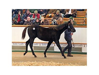 Lot 507, a Lethal Force colt, brought 110,000 guineas.