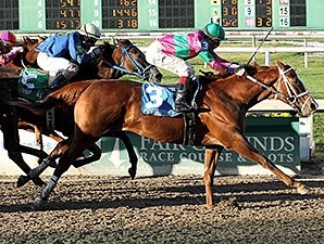 Dolphus, a half brother to Horse of the Year Rachel Alexandra, made his career debut a winning one at Fair Grounds in Louisiana Nov. 22