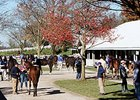 Keeneland: Average Up as Sale Nears End