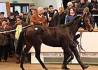 Average, Median Down at Tattersalls Mare Sale