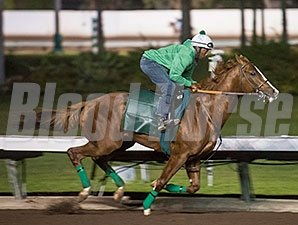 California Chrome - Los Alamitos, November 21, 2015.