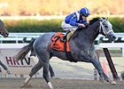 "Mohaymen won the Nashua on Nov. 4.<br><a target=""blank"" href=""http://photos.bloodhorse.com/AtTheRaces-1/At-the-Races-2015/i-C83L8sL"">Order This Photo</a>"