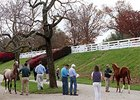 Keeneland: 11 Six-Figure Lots on Day 8