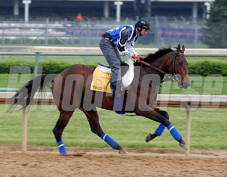 Tiago jogs at Churchill Downs as a contender for the 2007 Kentucky Derby.