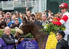 "Stephanie's Kitten following her Breeders' Cup Filly and Mare Turf win.<br><a target=""blank"" href=""http://photos.bloodhorse.com/BreedersCup/2015-Breeders-Cup/Breeders-Cup-Filly-and-Mare-Tu/i-gd5mw34"">Order This Photo</a>"