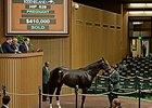 Harbor Mist was purchased for $410,000 to pace the early portion of the third session at the Keeneland November breeding stock sale.