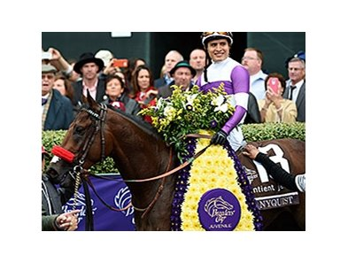 Nyquist will stand at Darley's Jonabell Farm near Lexington.