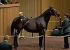 Hip 342, Lacadena, was purchased for $1.3 million.