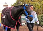 Shared Belief at Golden Gate Fields on November 5.