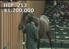 Keeneland November Sale: Sunset Glow - Hip 213