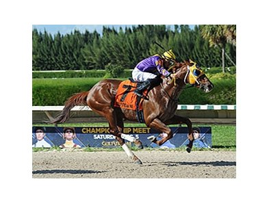 "Saraguaro takes the Sunshine Millions Classic Preview at Gulfstream Park West.<br><a target=""blank"" href=""http://photos.bloodhorse.com/AtTheRaces-1/At-the-Races-2015/i-H3cVzHs"">Order This Photo</a>"