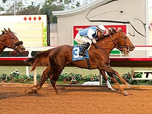 Lucky Folie Steals The Show In Desi Arnaz Bloodhorse