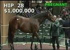 Keeneland November Sale: Colonial Flag - Hip 28