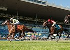 Turf racing at Woodbine