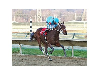 Bird of Trey won the Pennsylvania Nursery Stakes by 7 1/4 lengths.