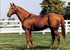 Pedigree Analysis: Affirmed