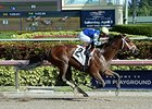 "Itsaknockout returned a winner in an allowance/optional claiming event Dec. 31 at Gulfstream Park.<br><a target=""blank"" href=""http://photos.bloodhorse.com/AtTheRaces-1/At-the-Races-2015/i-SbJB7Wq"">Order This Photo</a>"