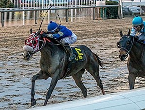Bullards Alley wins the Woodchopper Stakes.