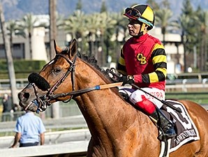 Toowindytohaulrox, #13, charges to victory in the Daytona Stakes Dec. 26.