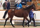 Stakes Winner Toujours L'Amour sold for 190,000 guineas ($300,371).
