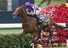 Japanese Horses Dominant in Hong Kong