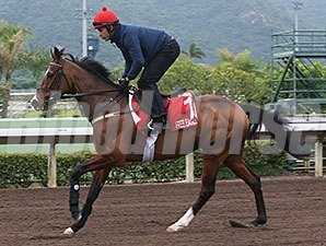 Free Eagle jogs at Sha Tin Dec. 8.