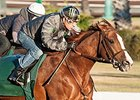 California Chrome Drills in Company at Los Al