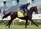 Setback for Green Mask in Hong Kong