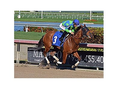 Cocos Cat won by 1 3/4 lengths on December 11.