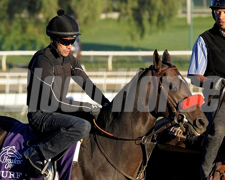 Caption: Cogito, Turf