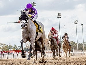 Watch My Smoke wins the 2015 Louisiana Champions Day Starter Handicap.